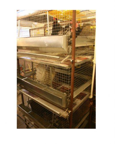 Фото 2 - Клетка для кур-несушек 3/15 «Золушка».